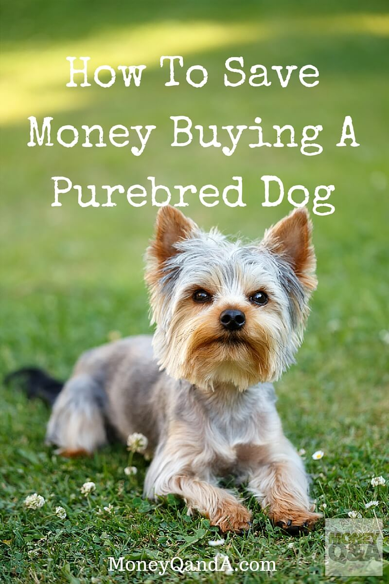 How to save money buying a purebred dog