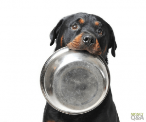 How to Save Money on Dog Food